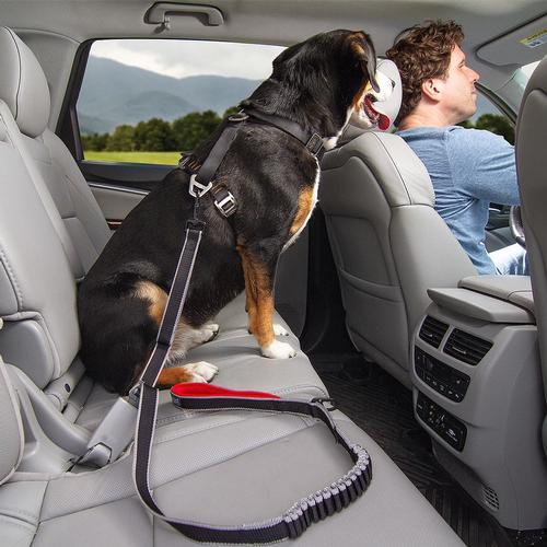Kurgo Leash To Seatbelt Buckle